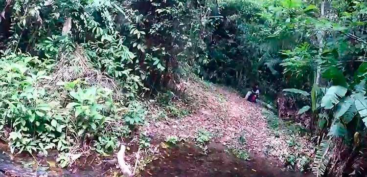selva belice