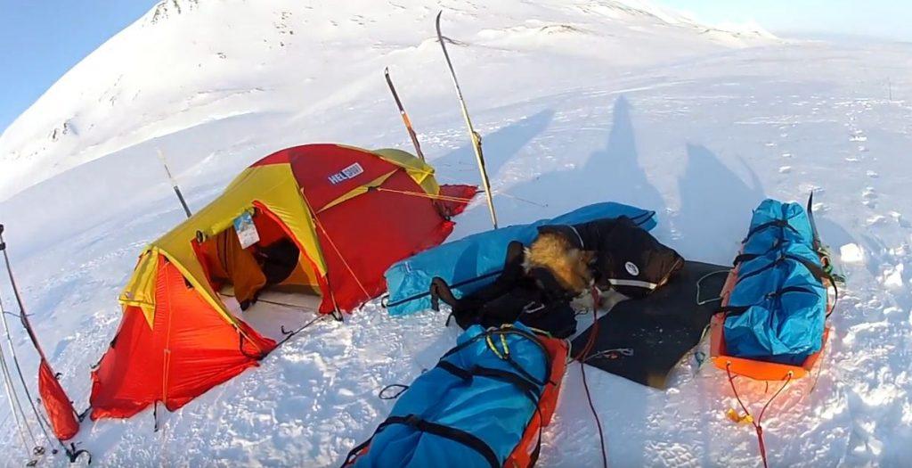 carpa indicada para temperaturas polares