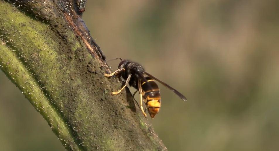 picadas de abejas
