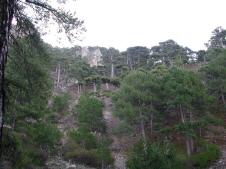Bosques de La sagra